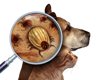 Ticks can attach to cats and dogs